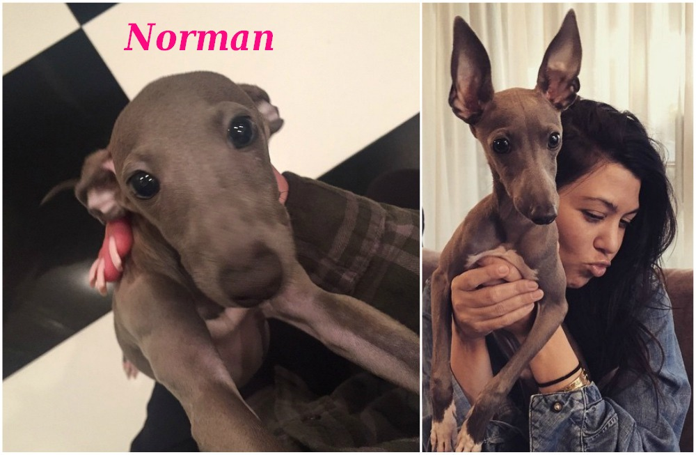 Kylie Jenner current dog Norman