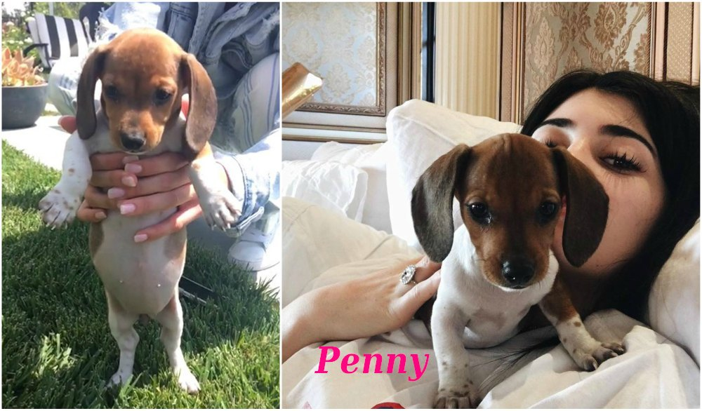 Kylie Jenner`s cute newest puppy - dog Penny