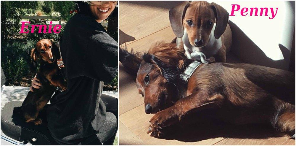 Kylie Jenner`s cute puppy - dog Ernie