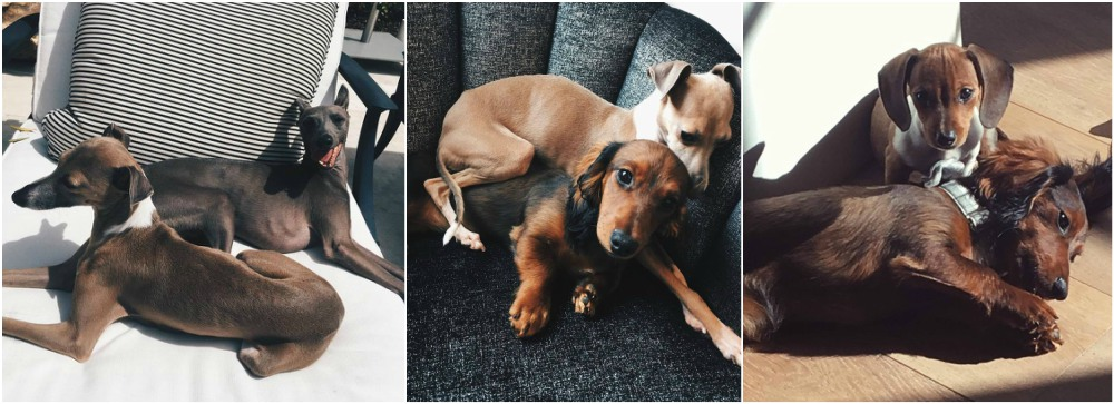 Kylie Jenner`s pets - dogs Bambi, Norman, Ernie and Penny