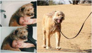 Ryan Gosling`s dog George