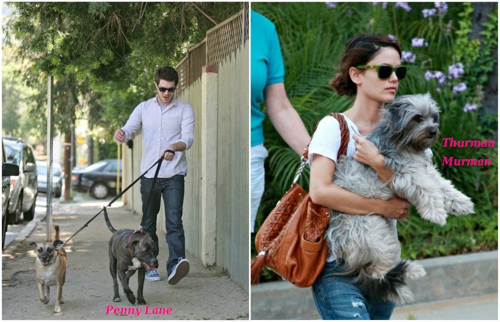Adam Brody`s pets - dogs Penny Lane and Thurman Murman