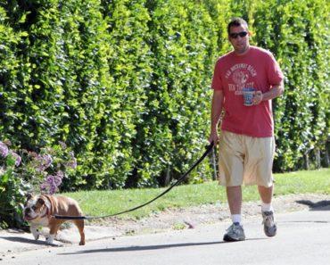Adam Sandler Pets