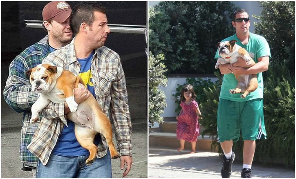 Adam Sandler with his dog