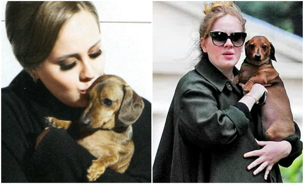 Adele dog Louie