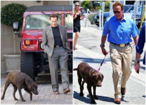 Arnold Schwarzenegger dog - Gustav