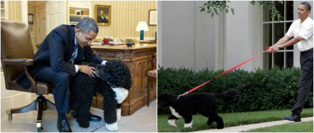 Barack Obama pets - Dogs Bo, Sunny