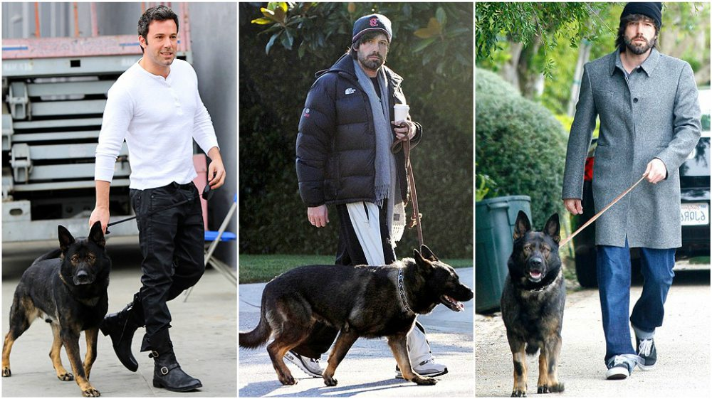Ben Affleck dog German Sheperd