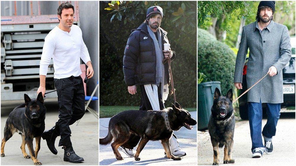 Ben Affleck dog German Sheperd