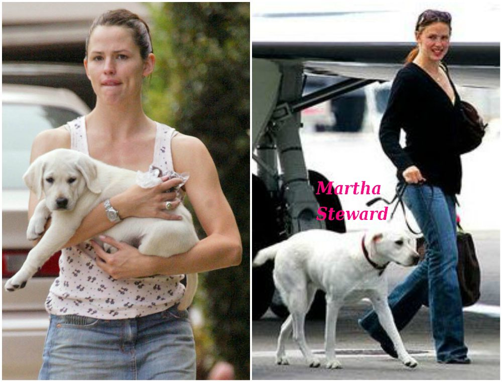 Ben Affleck and Jennifer Garner dog  white Lablador - Martha Steward