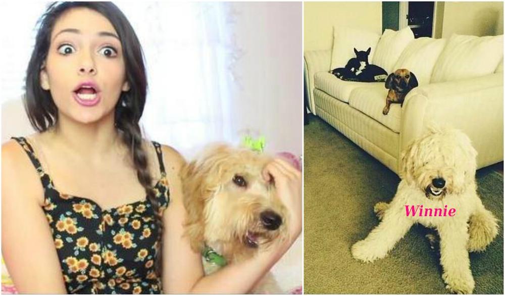 Bethany Mota pets - dog Winnie
