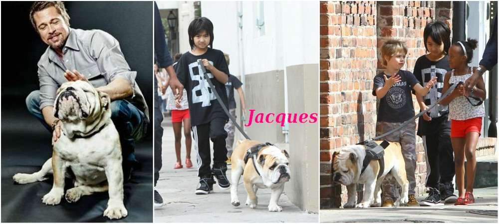 Brad Pitt and Angelina Jolie pets - dog Jacques