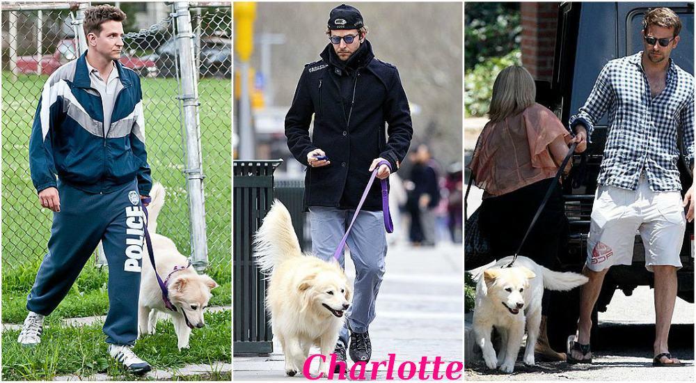 Bradley Cooper`s pet - dog Charlotte