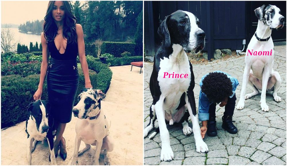 Ciara pets - dogs Prince and Naomi