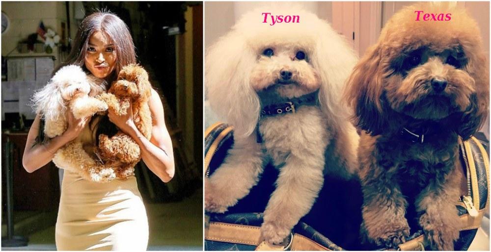 Ciara dogs Tyson and Texas