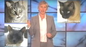 Ellen Degeneres Cats - Chairman, Charlie and George