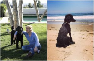 Ellen Degeneres pet dog Mabel