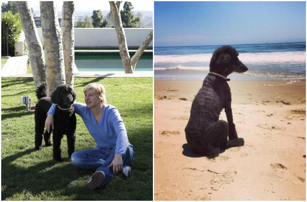Ellen DeGeneres And Her Wife Portia De Rossi Have Dogs And