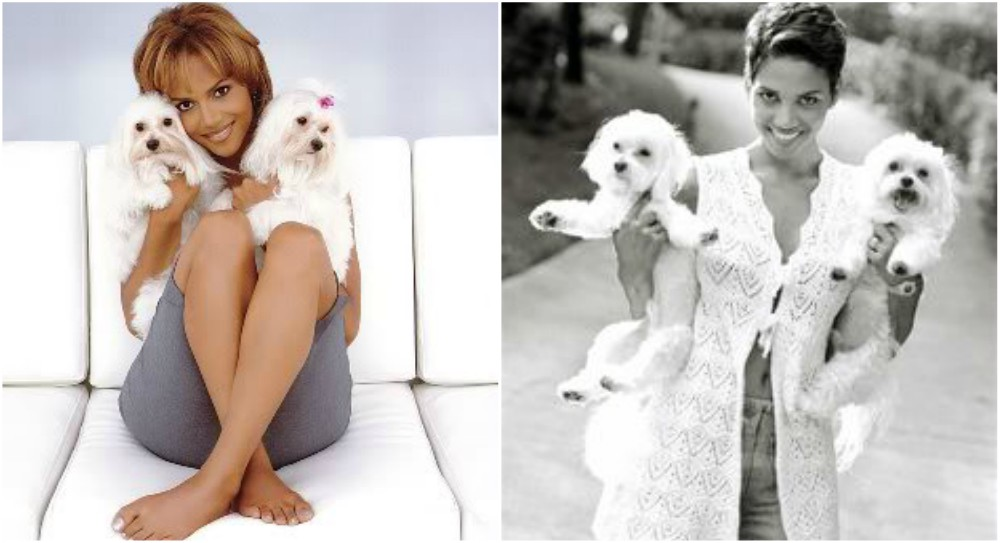 halle berry pets