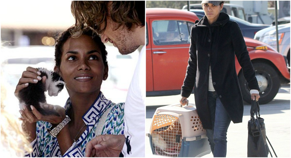 Halle Berry Pets - 2 cats