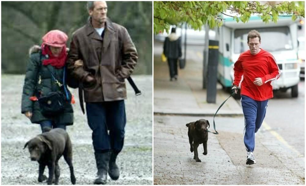 Hugh Laurie dogs - 2 brown Labrador-retriever mix