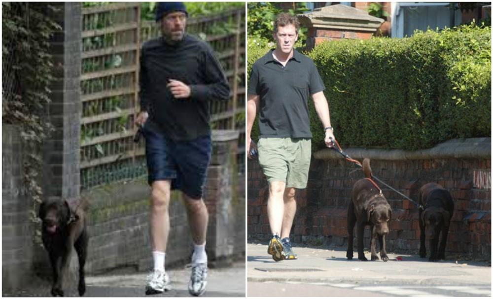 Hugh Laurie`s dogs - 2 brown Labrador-retriever mix