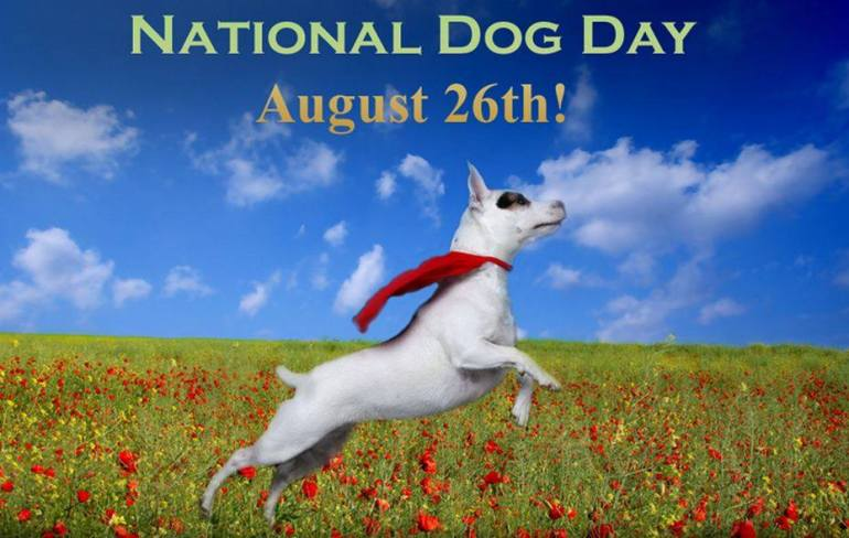 national-dog-day-hashtag-appear-1