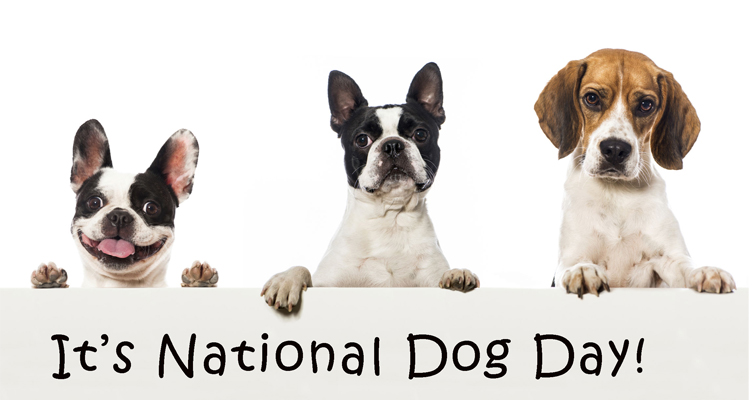 national-dog-day-hashtag-appear