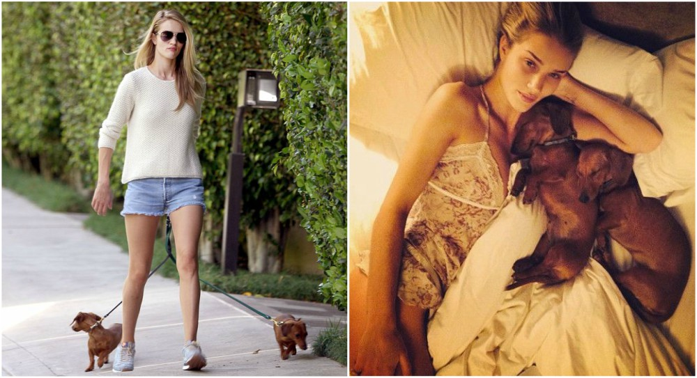 Rosie Huntington-Whiteley Pets - Dolly, Peggy