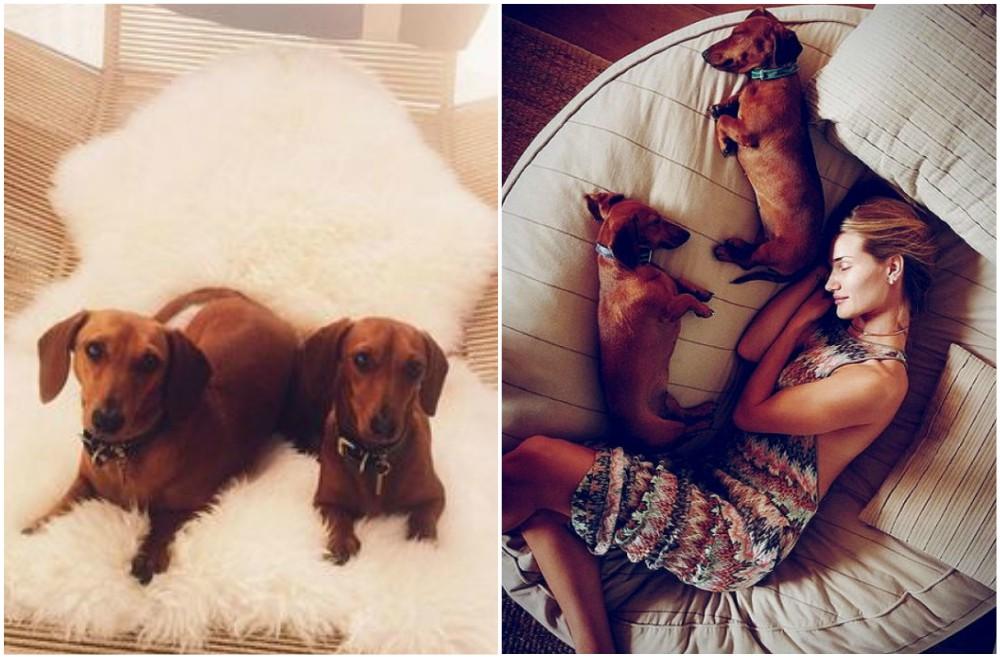 rosie huntington whiteley pets