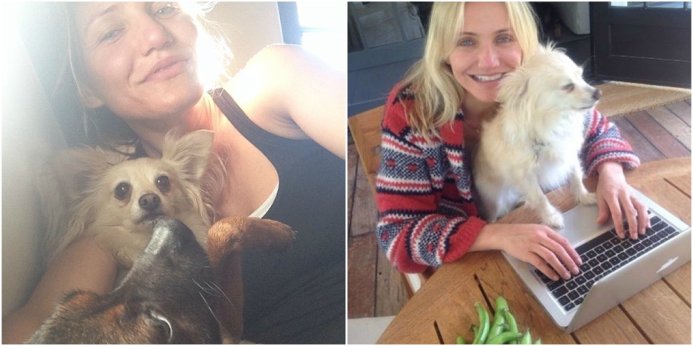 Cameron Diaz pet - faithful, small furry dog
