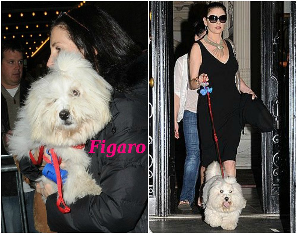Catherine Zeta-Jones pet - dog Figaro