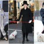 Catherine Zeta-Jones` one and only dog Figaro