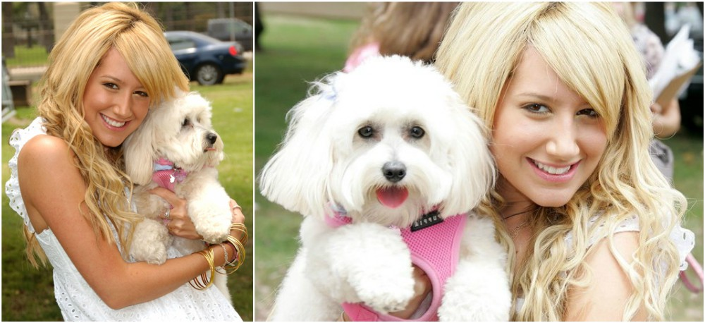 Ashley Tisdale with her pet - dog Blondie