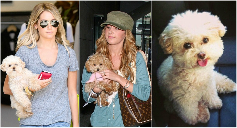 Ashley Tisdale with her pet - dog Maui